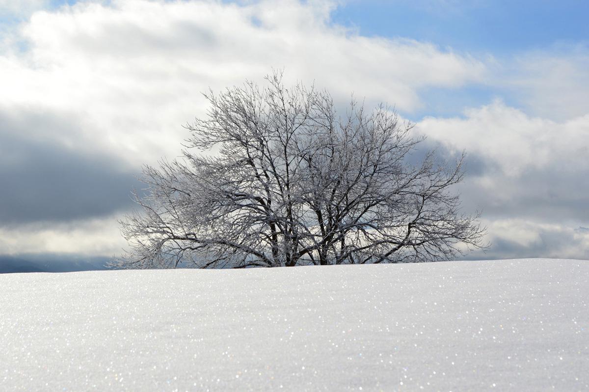 zima01